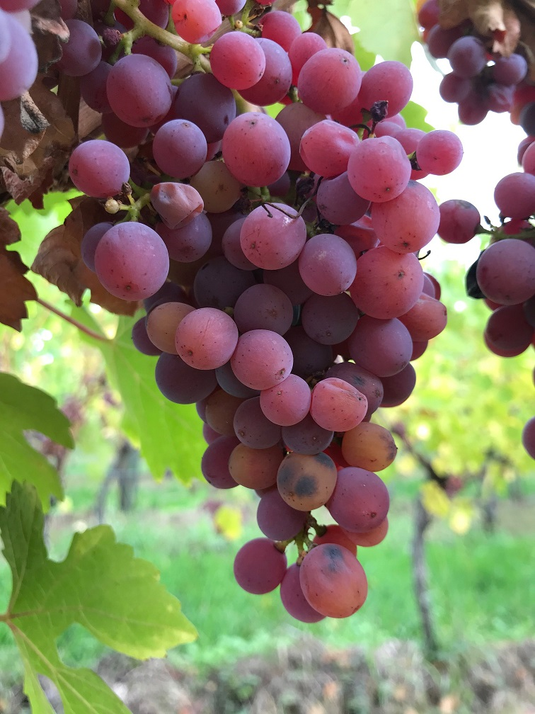 Livraison Vins d'Alsace