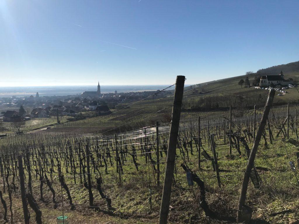 Février et la taille de la vigne